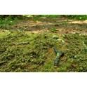F601 - Lesní podrosty - jarní (travní foliáž z řady Prémium)