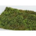 F571 - Divočina s keři jarní (travní foliáž z řady Prémium)
