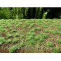 F600 - Lesní základ - hustý les (travní foliáž z řady Prémium)